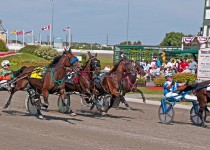 OHW Harness Racing