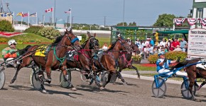 Gold Cup & Saucer Harness Racing