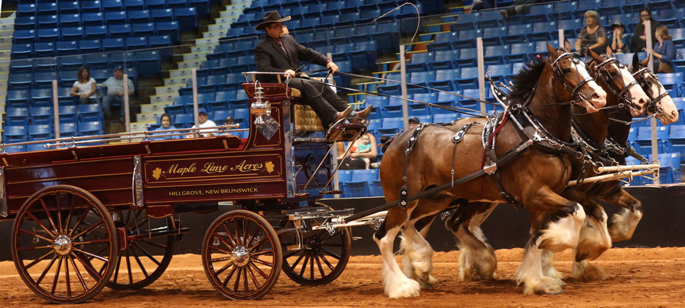 Draft Horse Shows