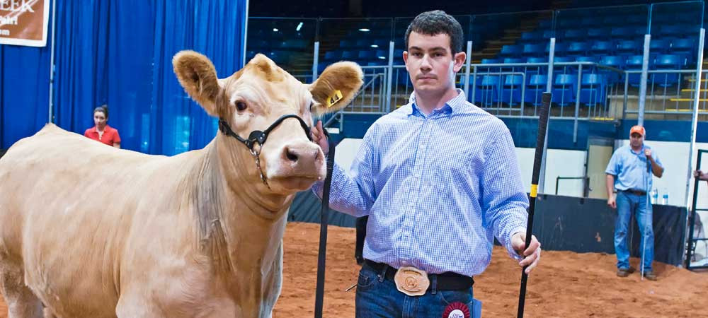 Beef Cattle Shows