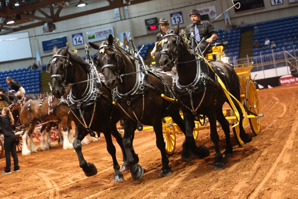 2017 Old Home Week Draft Horse Show