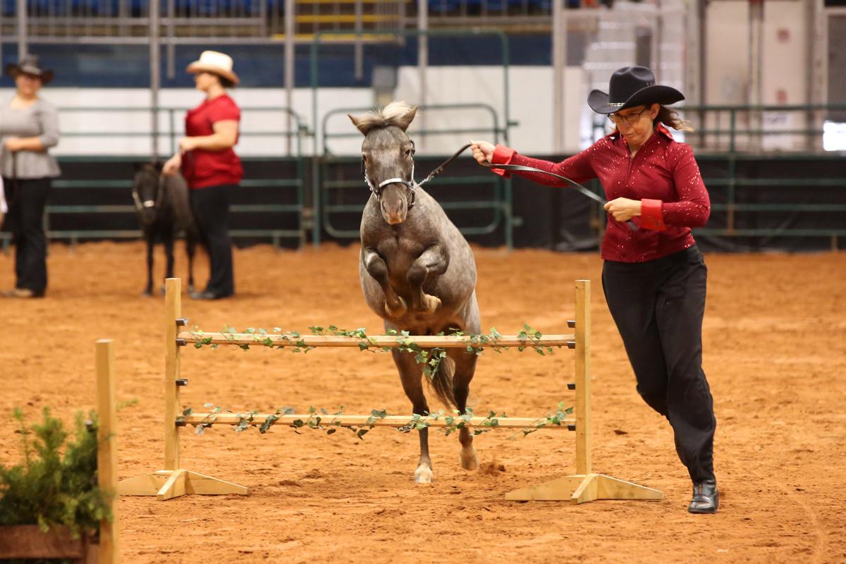 2017 Old Home Week Mini Horse Show