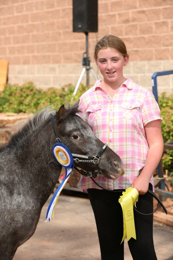 2017 Old Home Week Mini Horse Show