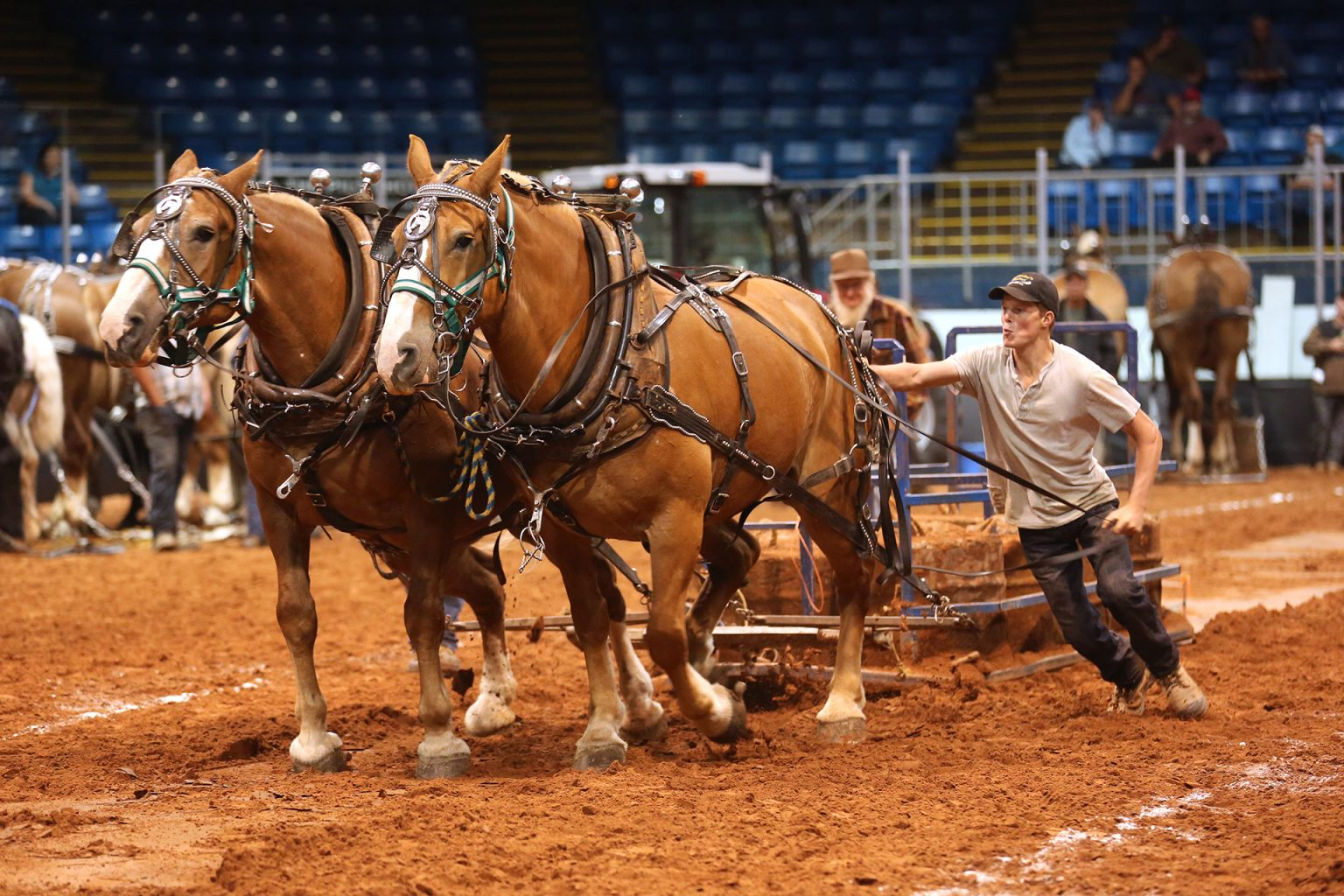 Old Home Week Horse Pull Competition