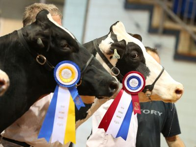 Old Home Week Dairy Competition
