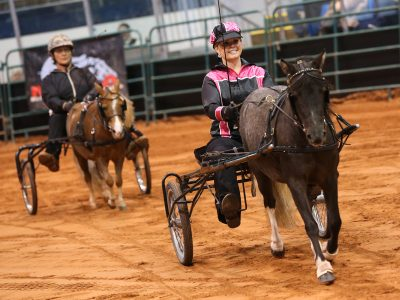 Old Home Week Miniature Horse Competition