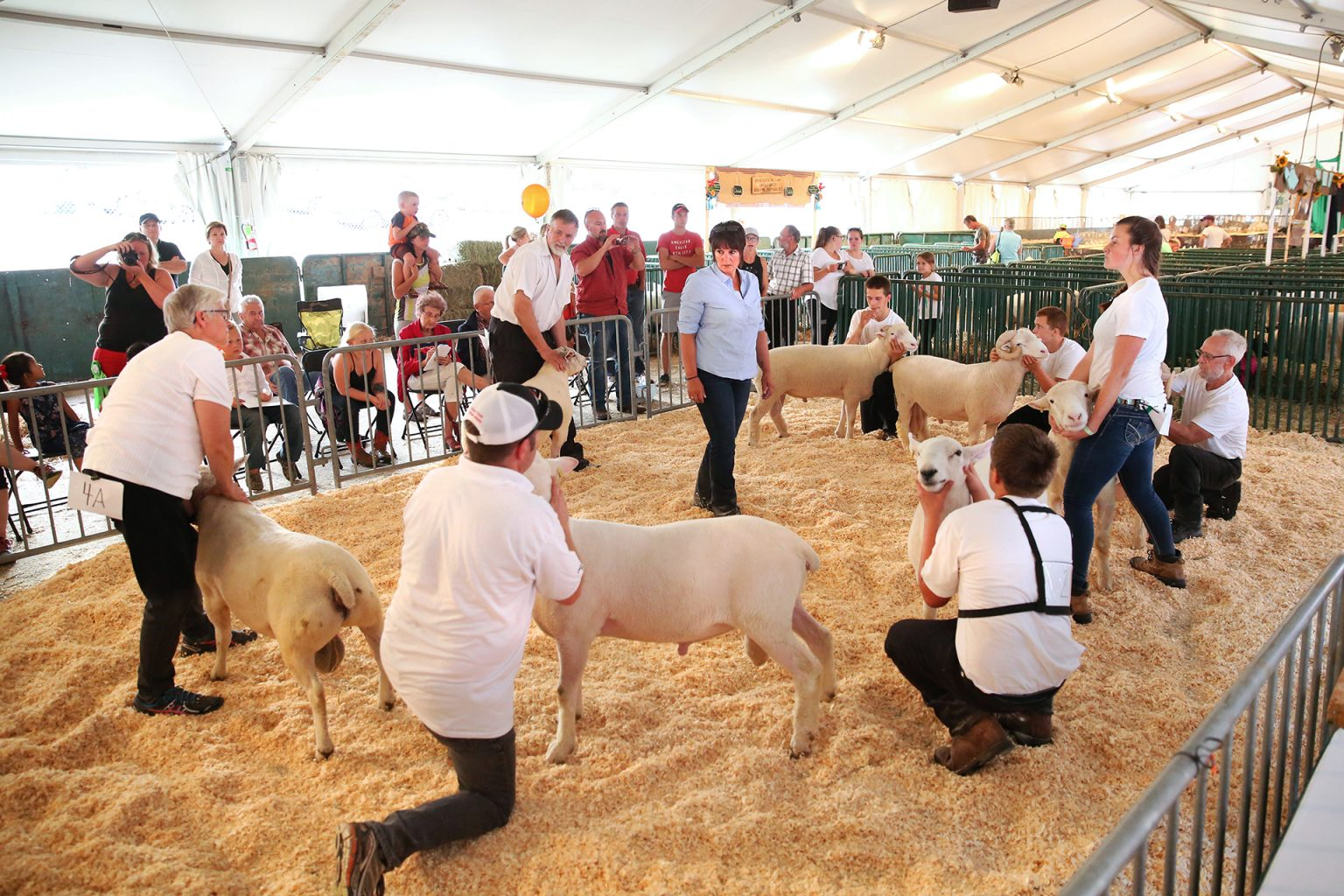 Old Home Week Sheep Competition