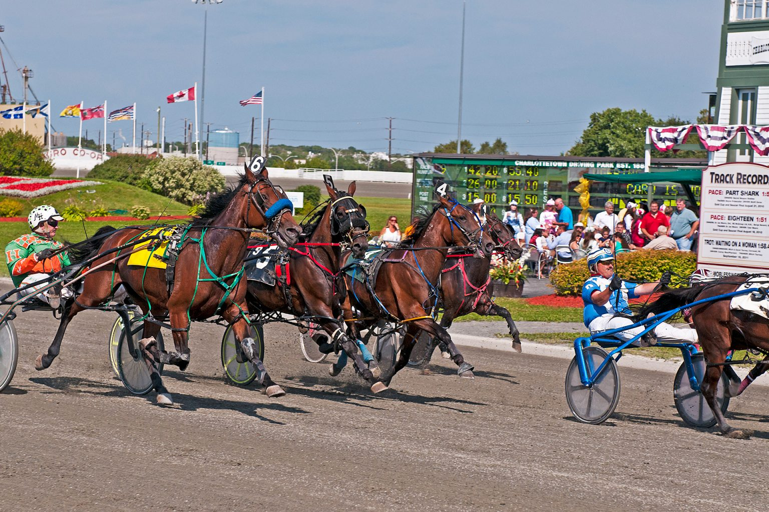 Gold Cup and Saucer Harness Racing